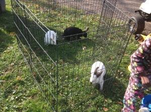 rabbitmove